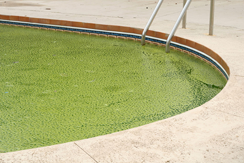 My pool is green, what should I do?